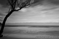 / (Jean-Jacques Mattei) Tags: sea mer france corse nb arbre minimaliste poselongue