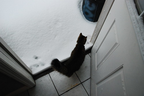 You want to go outside? ORLY?