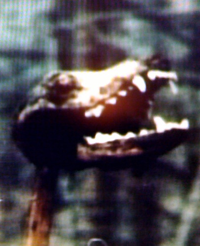 BONELUST - Video Still of Dog Head on Stake in the Backyard of Jeffrey Dahmer's Childhood Home in Bath, Ohio