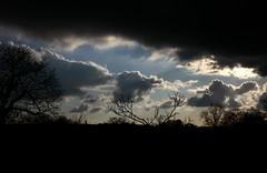 quando vedi tutto nero basta un graffio alla vita per ritrovare il sole.. (PrIsCiL in LONDON ..(she lives there now!)) Tags: sky kewgardens black london silhouette alberi clouds nuvole cielo azzurro londra nero