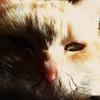 (archifra -francesco de vincenzi-) Tags: italy cat chat gato gatto ciccio molise archifraisernia francescodevincenzi