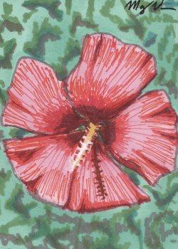 16-Mallow Rose