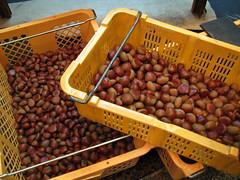 Kyoto  - Nishiki Koji Dori  - Chestnut  () Tags: japan store kyoto market   chestnut grocery marron march japon commercialstreet picerie  nishikikojidori    ruecommerante