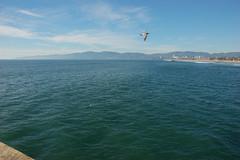 Seagull Flyby (loudguitars) Tags: ocean venice beach pacific venicepier marvinbraudebiketrail