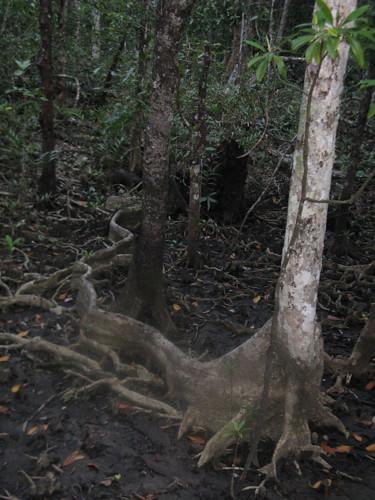 Mangrove (by Simbel_myne)