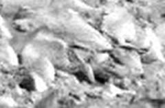 2P167115185EFFA9F4P2412R2M1 #c2 rsz (orgasmictomato) Tags: mars nasa analysis anomalies lifeonmars marswatch wastedresources hiddentruths livingalie rocksalive