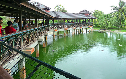 Langkawi Crocodile farm24