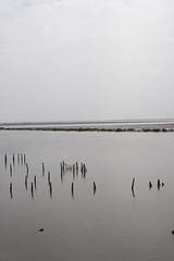 Western Seashore of Formosa, Tainan Chi-Ku () (Howard.S.) Tags: tainan  chiku