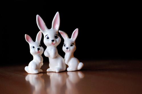 011 - baby bunnies!!