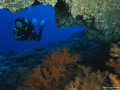 patiente (Philippe Guillaume) Tags: ocean sea mer nature mar scuba diving natura canarias tenerife canary canaries plongée buceo seasea dx1g
