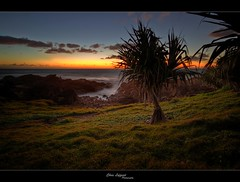 Mystical Morning (Christolakis) Tags: sunrise australia nsw hdr pandanus sigma1020 hastingspoint mywinners anawesomeshot canon7d absolutelystunningscapes