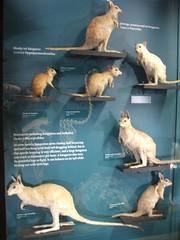 DSCF3586 (Phil D-UK) Tags: animals tring naturalhistorymuseum rothschild