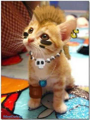 tribal punk kitty