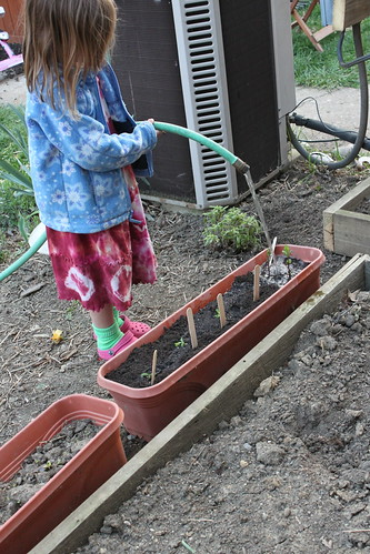 watering a child made container garden