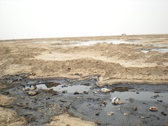Hydrocarbon Contamination on the Fao Peninsula, Iraq