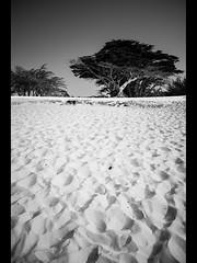 carmel beach (sebboh) Tags: bw tree beach sand picnic cypress carmelbythesea sonyrx1 carlzeiss35mmf2sonnar