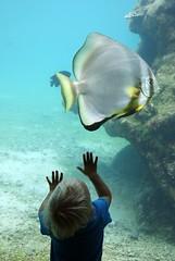 Fascination... [Explore 04/11/2013] (Sokleine) Tags: nature aquarium indianocean turtles protection iledelaréunion stleu reunionisland tortues océanindien kelonia fromyoutous