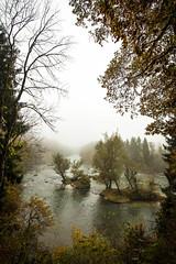 IMG_5518.jpg (blubberli) Tags: schweiz wasser nebel herbst insel gelb grn fluss wald bume aargau reuss inseln niederwil
