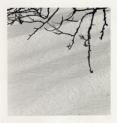 - (meubzh) Tags: trees snow texture analog landscape delta100 minimalism ilford winterlight argentique pyrénées pentaxmx ariège biros frenchpyrenees shootfilm bergger unspectacular intimist couserans nonspectacular photographiemodeste