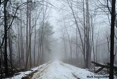 Disappearing Trail - Explore (mswan777) Tags: trees snow color nature fog landscape woods nikon exposure michigan lakemichigan greatlakes lakeshore polarizer circular d5100