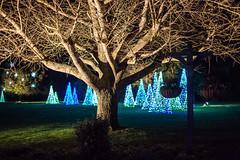 EV7A9998-23 (cglphoto) Tags: christmas light 3 ex gardens canon 50mm lights mark f14 magic low alabama sigma 5d bellingrath dg theodore mkiii hsm 2013 5d3