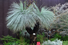 Grass Tree (chooyutshing) Tags: by singapore board parks grasstree baybay southmarina baynational domegardens australiaxanthorrhoea preissiilflower
