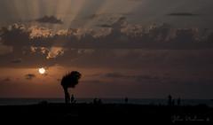 * (Julia Perelman) Tags: light sunset sea summer sky sun tree clouds evening israel rays haifa