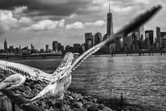 Liberty State Park, 2016 (Alan Barr) Tags: libertypark libertystatepark birds bird newjersey nj jersey landscape water blackandwhite blackwhite bw mono monochrome olympus omd em5