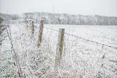 A Rare Fence (Shastajak) Tags: snow fence fencefriday fenceposts alightdustingandthatsallwegot itusedtosnoweveryyearbutnowwerarelyseeany wenothadanydecentsnowsincebeforeigotsqlandivehadhim4years