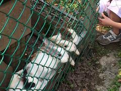 福田園教育休閒農場 (alberth2) Tags: 福田園教育休閒農場 陽明山 yangmingshan 兔 rabbit