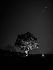 PhoTones Works #8499 (TAKUMA KIMURA) Tags: photones olympus omd em1mark2 takuma kimura 木村 琢磨 landscape nature night scene light up tree silhouette 風景 景色 自然 夜景 夜 ライトアップ 木 樹 シルエット lumecube