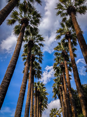 Road Full Of Palm Trees (Tassos Giannouris) Tags: palmtrees athens greece summer sky clouds natur nature trees blue tree