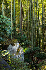 _MG_2825_Japan_20170323-20170419 (LuxTonnerre) Tags: 2017 flickr japan日本 luxtonnerre spring vacation yamanashiprefecture bamboo travel 山梨県 kōshūshi yamanashiken japan