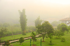 Misty Morning (Chandana Witharanage) Tags: srilanka southasia mawalapitiya upcountry fog scenery scene scenic view trees nature magical peaceful tranquil mood atmosphere atmospheric mist weather landscape fence vista outdoor grass misty path sky beautiful image photo photography pjhotograph lovely cold morning countryside field colour tranquility colourimage lush greenery rural quiet canon7defs18200mmf3556is chandanawitharanagephotography 7dwf okwinresortnawalapitiya 7dwfflora