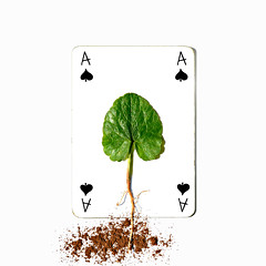 ace of spades (brescia, italy) (bloodybee) Tags: 365project playingcards cards play game a ace spade leaf roots ground soil nature vegetal humor fun stilllife white black green brown square
