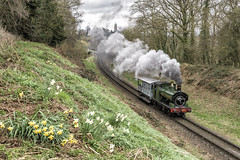 Spring Flowers (4486Merlin) Tags: 813 england europe exgwr heritagerailways midlands ptr pregroupinggwr railways severnvalleyrailway steam transport unitedkingdom bridgnorth shropshire gbr sirlamiel springsteamgala