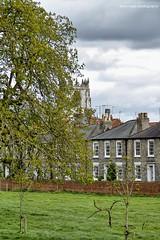 Beverley - East Yorkshire (SteveH1972) Tags: beverley eastyorkshire england northernengland britain canon7d canonef70200mmf28lusm canon70200 70200 canon yorkshire 2017 uk europe green