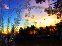 Ice flowers (na_photographs) Tags: glass cold eisblumen kalt frostig vereist