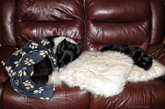 02 Comfort (manxmaid2000) Tags: pets home sofa comfortable dog cat together sleep collie cushion seat friends companion
