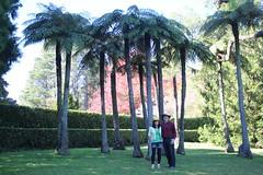 Tree Fern (Cyathea australis), private garden (Poytr) Tags: treefern roughtreefern cyathea cyatheaceae cyatheaaustralis arfp nswrfp qrfp vrfp arffern mountwilsonnsw mountwilson bluemountains chensmallbird nsw arfbotanist peterwoodard
