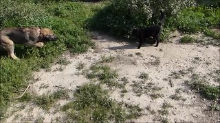 Erziehungsarbeit mit Babetli * Education with Babetli * Trabajo educativo con Babetli *  . ;)))     . Hunde Video 8-0