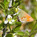 I believe this is a Red Banded Hairstreak
