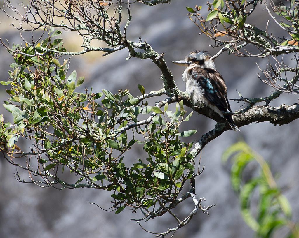 Mayberry tasmania