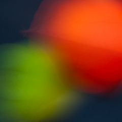 Yin Yang Physalis (de_frakke) Tags: abstract yinyang physalis lampionplant still beweging moving complementair