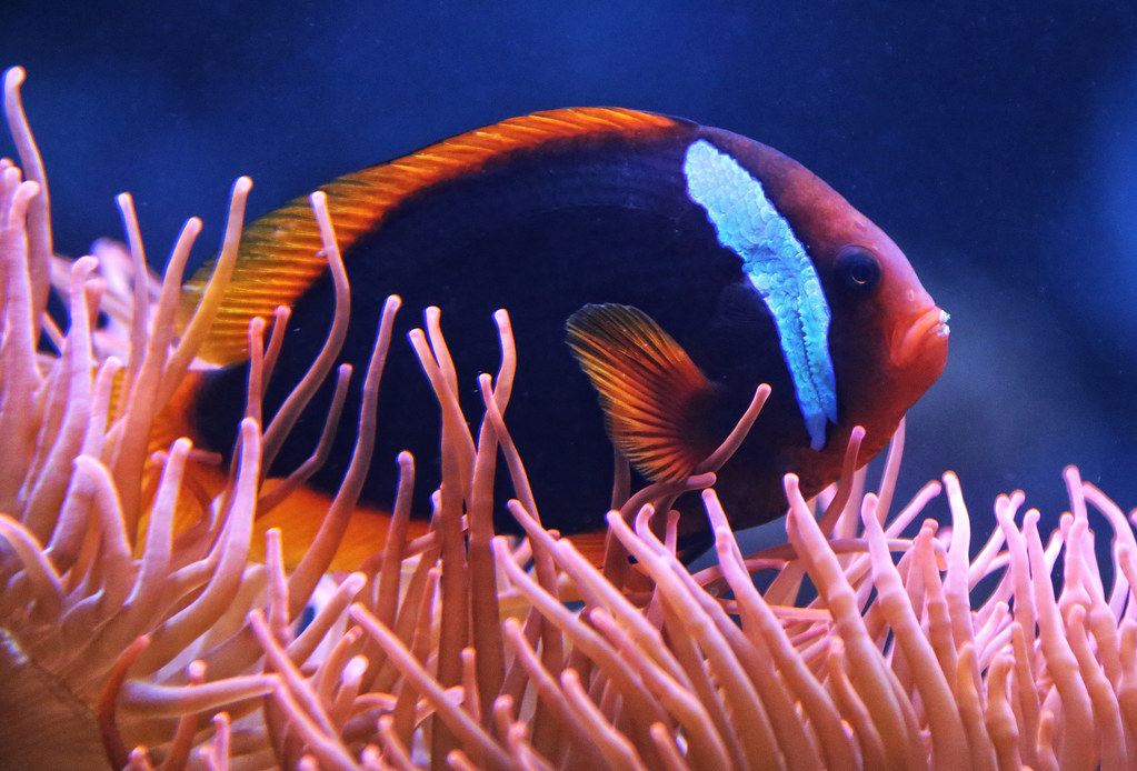 the world 39 s best photos of aquarium and barsch flickr hive mind. Black Bedroom Furniture Sets. Home Design Ideas