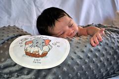 JuanAnnouncements-46 (TrishaLyn) Tags: baby babyboy birthannouncement people juanmartinguzman babies crafts crossstitch bibs birthrecords sanleandro california newborns