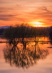Reflections at sunset (Middle aged Nikonite) Tags: sunset california landscape outdoor reflection sutter buttes nikon d7200 aquatic trees clouds evening
