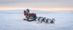 Dog Sledding in the Arctic (Reiterlied) Tags: 18 35mm d500 dslr dog husky ice lego legography lens minifig minifigure nikon photography prime reiterlied sledge snow stuckinplastic toy winter