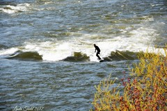 Rider on the wave...Explored! Thank you! :) (ltodd1) Tags: clark fork river 2017