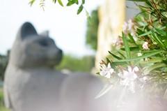 Lethal Paradise (ChocolateLlama) Tags: oleander cat statue paradise plant flowers